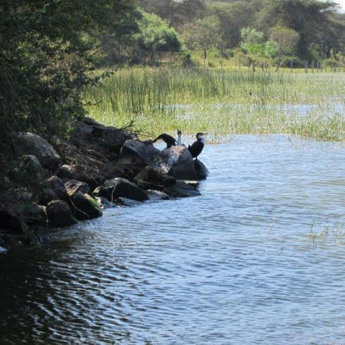 Et. water scene